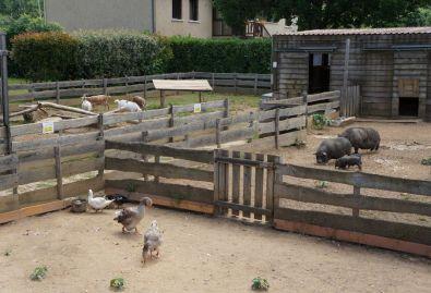 mini ferme - Camping en Dordogne disposant d'une mini-ferme